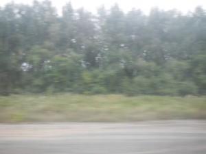 DSCN3391